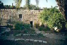 החצר האחורית