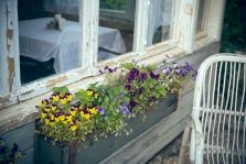 פרחים בכל מקום