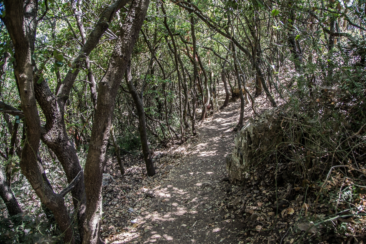 The path leading to Mountain Neria