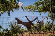 Druze fence 1