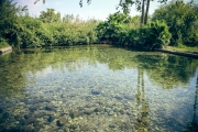 Forrás-tó
