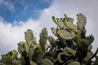 ...jobboldalt kaktuszok