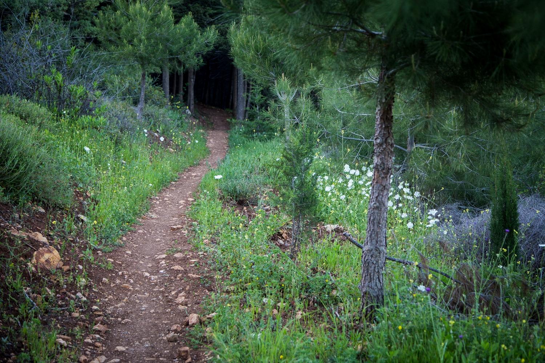 farkasokkal teli erdő